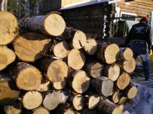 birch cord