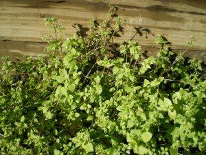 Green, green, green plants